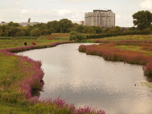 Wetlands Trust - a central London farm and wetland - former industrial wasteland